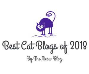 Best Cat Blogs of 2018 - The Meow Blog - Top Pick