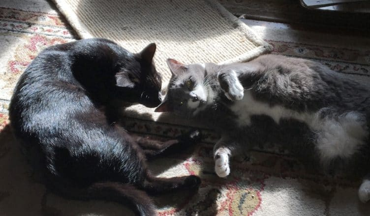 Nutrition for senior cats. Munchkin and Periwinkle.