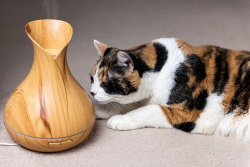 Are essential oils dangerous to cats?